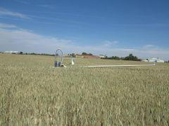 Joao Rosa crop harvester